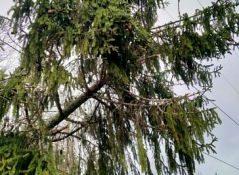 обрыв провода ВЛ деревом