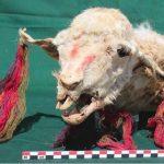 В Перу нашли останки похороненных заживо лам