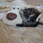 Бездомный оренбургский котопёс отогреется в теплом приюте