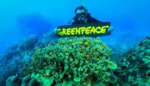 greenpeace гринпис