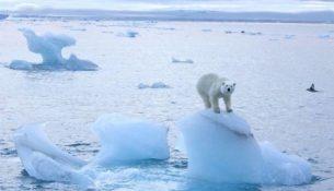 арктика белый медведь лед