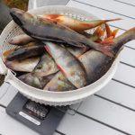 Рыболовы-спортсмены выловили 70 кг рыбы в озере-охладителе Калининской АЭС