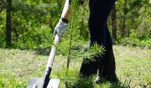 посадка деревиев