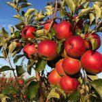 «Россети Центр» способствует развитию сельхозпредприятий в Липецкой области