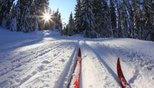 лыжня спорт зима лес