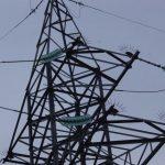 Энергетики Смоленскэнерго проводят мероприятия поnbsp;профилактике технологических нарушений, вызванных воздействием животных