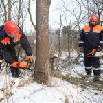 Специалисты «Россети Северо-Запад» обследуют ЛЭП вблизи бобровых плотин