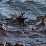 Разлив нефти на Черном море в Новороссийске оказался в сотни раз больше, чем предположили специалисты