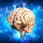 Ученые обнаружили в мозге центр принятия решений