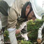 В Бурятии выясняют причину гибели леса возле промплощадки «Хиагды»